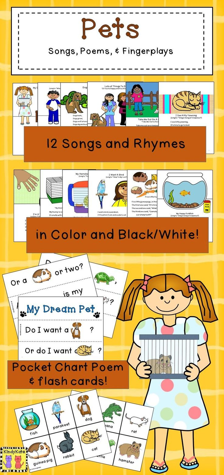 best pets study creative curriculum images on pinterest