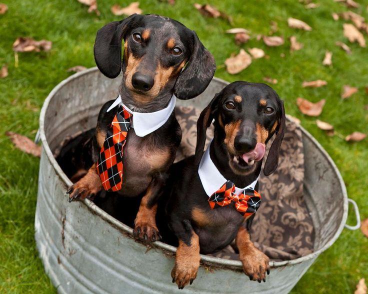 bf56e19bc0175631dc5e0f058aa5e116 tubs save animals