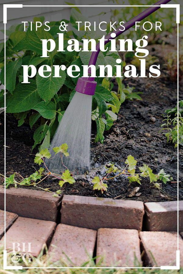 Perennial Planting Guide Gardening Tips Trends Perennials
