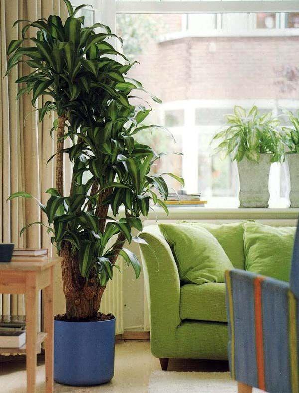 Фото: Как живые растения освежают и украшают интерьер (Фото)