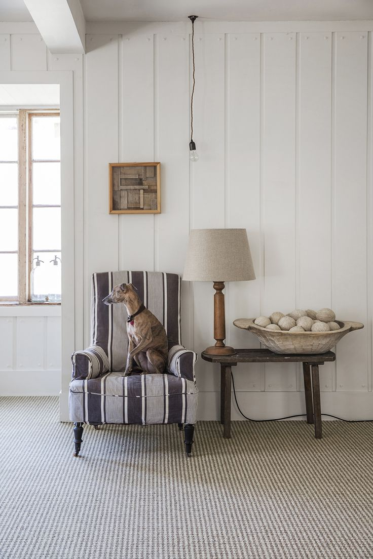 Neutral coloured carpet from wwwmichael johncouk Dog 25