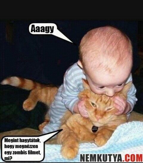 A macskának igaza van!
