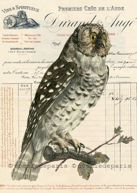 Owl print collage natural poster french vintage by noemiedeparis, $9.90