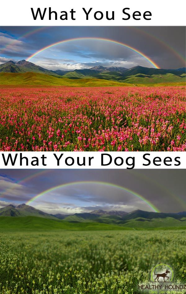 Picture Of How A Dog Sees