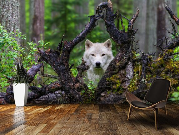 105 Best Forest Wall Murals Images On Pinterest