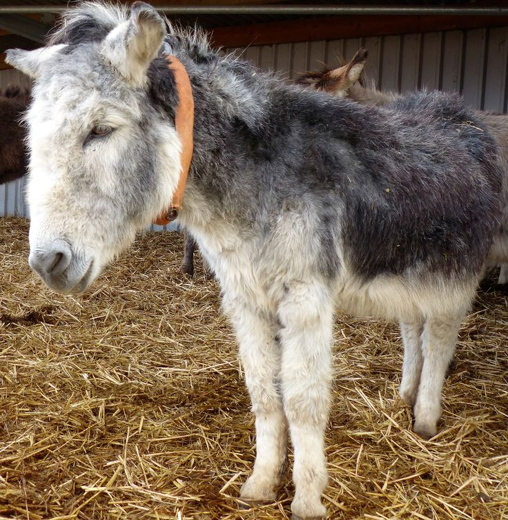 The Donkeys And Me: A Memoir. cepad Check Sudan selling upcoming gaining tableta