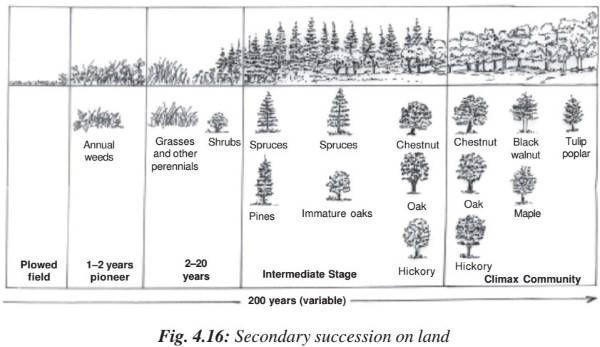 Ecological succession – Primary & Secondary Succession | Homeostasis