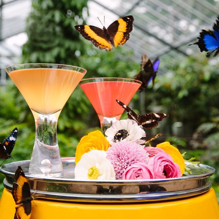 Melbourne Zoo Events. Butterfly House event space.