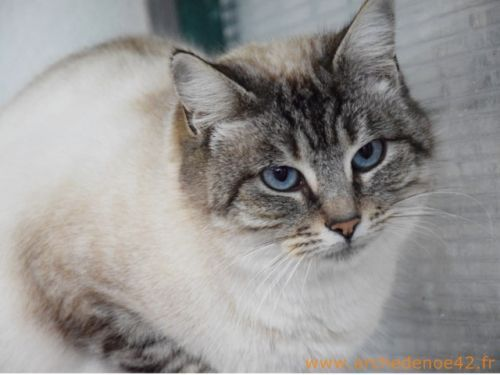 Chat sexe laval