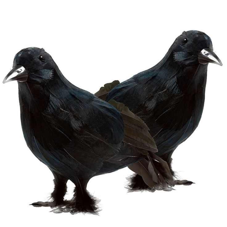 Black Feathered Crows Set Halloween Realistic Looking Birds Decoration 2 Pcs #Prextex