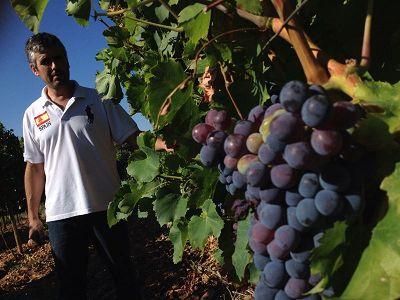 H (Hollejo): Piel de la #uva en la que se encuentran los pigmentos que dan color a los vinos rosados y tintos.