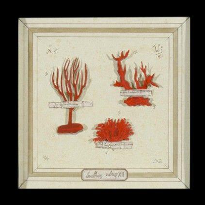 Still Life Coral 3