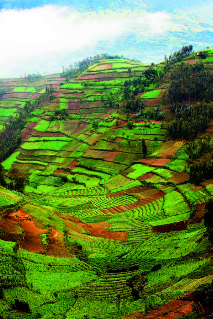 Rwanda! Hillside farming.