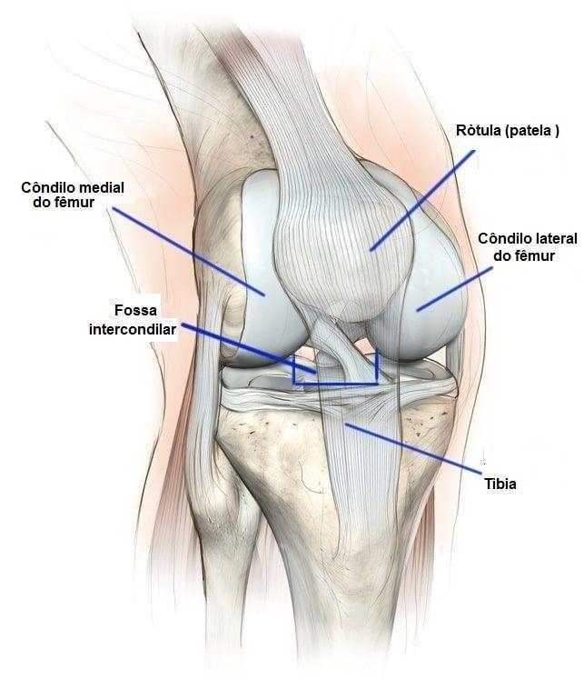 Na perna da e joelho dor anatomia
