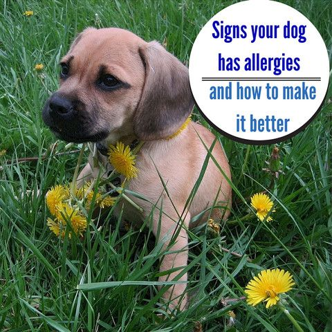 Allergy season isn't just for humans... what you can do to help your pet with allergies. http://www.wrapsit.com