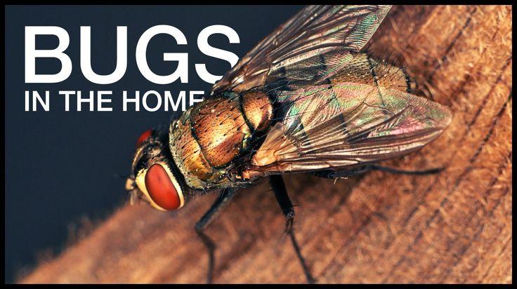 28 best High School Biology images on Pinterest | Biowissenschaft ...