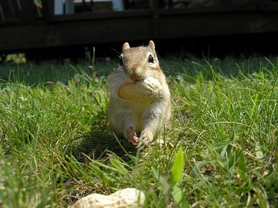 Skur! Ah Waja Ten Ma Fung Maba, Ah Wu Cwafng Peena.Fit, Peanuts, Friends Mabel, Cravings Peanut, Translation, Score, My Friends, Aminals, Nutty Squirrels