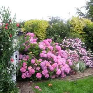 Irish Auntie's Garden