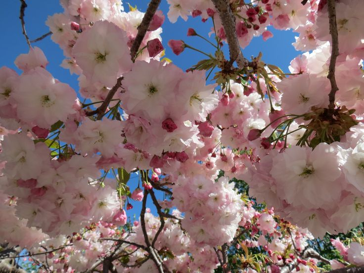 Any time of the year Te Wanaka Lodge is just beautiful.  Spring blossoms are a fav of ours!