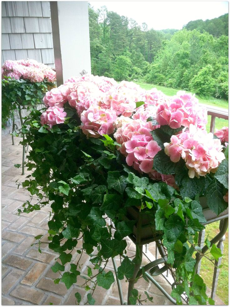 The veranda 2012 Knoxville Symphony Show House Winner - Thank you Scott Morrell of Flowers for adding the gorgeous hydrangeas