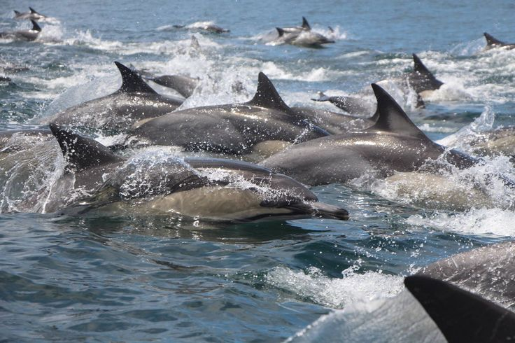 The opportunity to get this close to wild dolphins is an opportunity not to be missed!