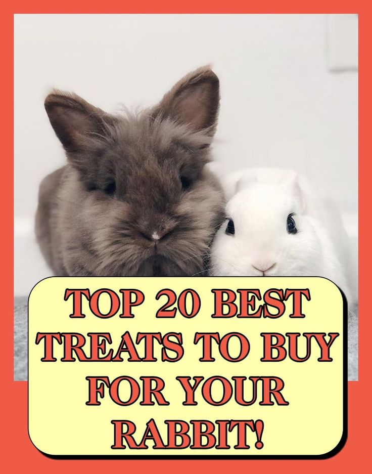 Pin on rabbit care for beginners