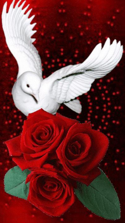 Розы и голуби картинка