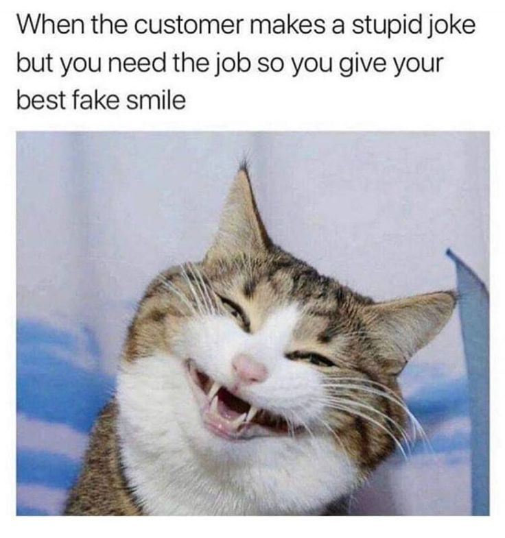 TOP 75 lustige Katzen Meme #funnymemes   – Hilarious Memes