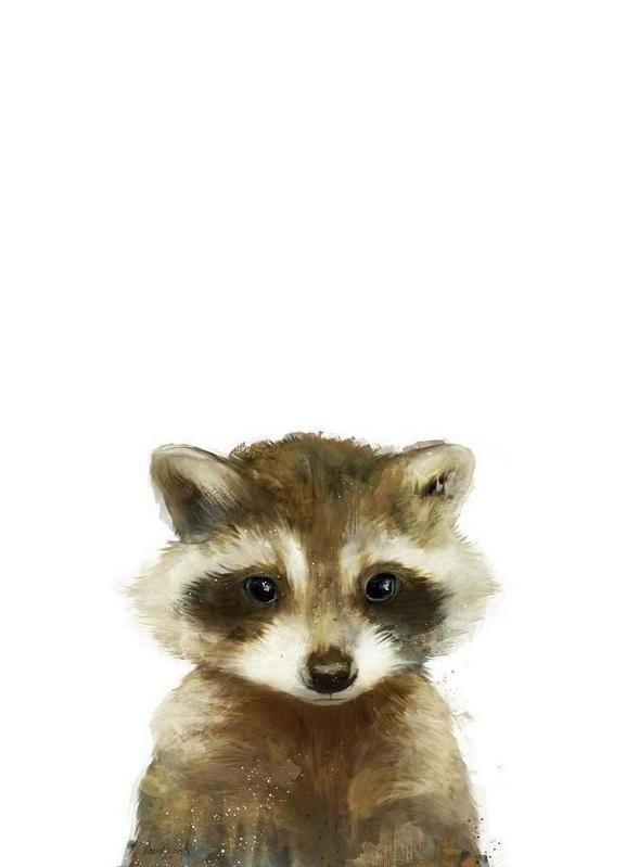 Little Raccoon - Amy Hamilton - Impression sur toile