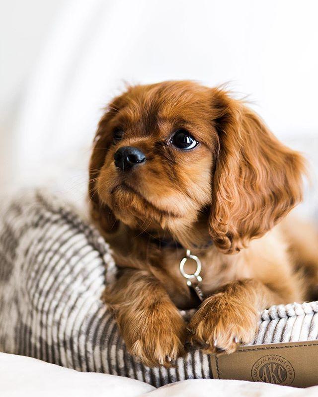 Best 25+ Cute baby dogs ideas on Pinterest