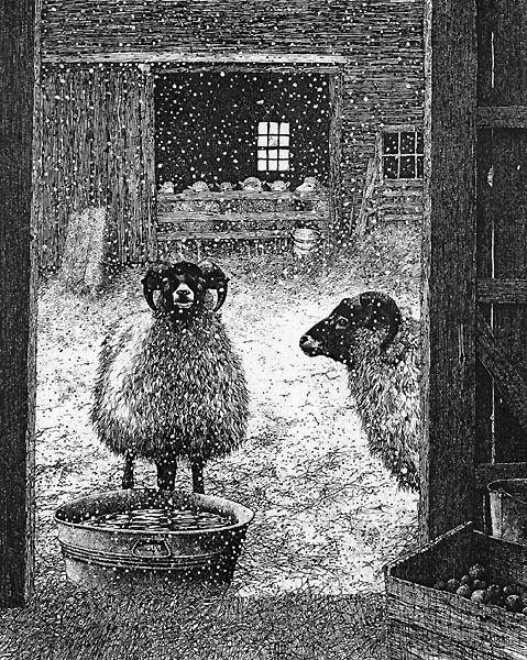Shetland Sheep... Pen & Ink by Gene Matras