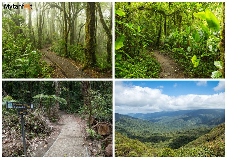 hikes in Costa Rica - Monteverde Cloud Forests
