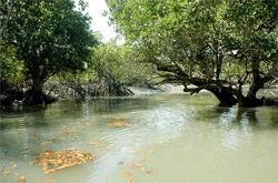 West Bengal Tourism Development Corporation - Sunderban Package Tour - Sunderban Safari by M. V CHITRAREKHA Ship