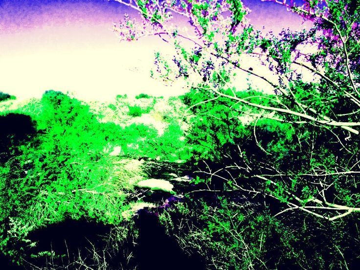 Wetlands Park Henderson,NV