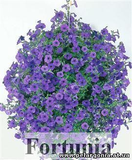 Петуния-сурфиния-каскадная петуния... (с) - по горячим камням, где пробились цветы