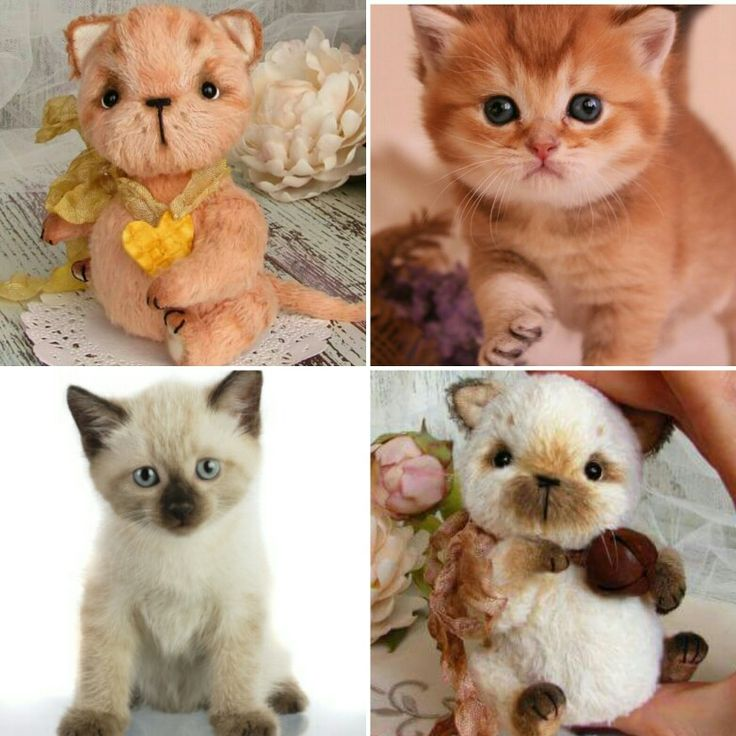 Art toy, kitten teddy by Villa Paradiso creazioni
