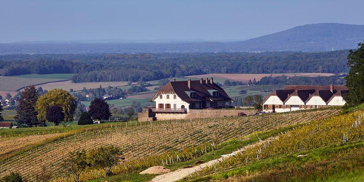 Der Weinbau im französischen Jura ist schwer verständlich und kaum mit der Moderne kompatibel. Doch trotz merkwürdiger Herkunftsbezeichnungen, extremer Anforderungen und eigenwilliger Weinbezeichnungen haben sich die Winzer aus Arbois oder Château-Chalon eine Marktnische erkämpft. Auch weil die Weine der Region so ausgezeichnet mit den hier üblicherweise gekochten Speisen harmonieren.
