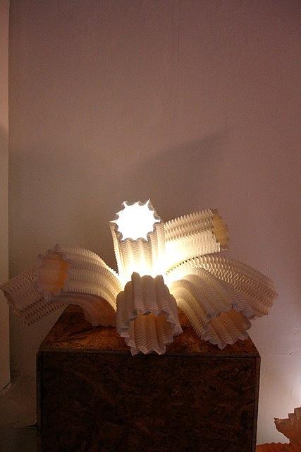 Anémona de mar / Sea anemone