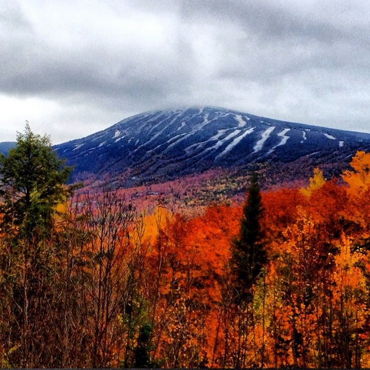 1000+ Images About Fall Foliage On Pinterest