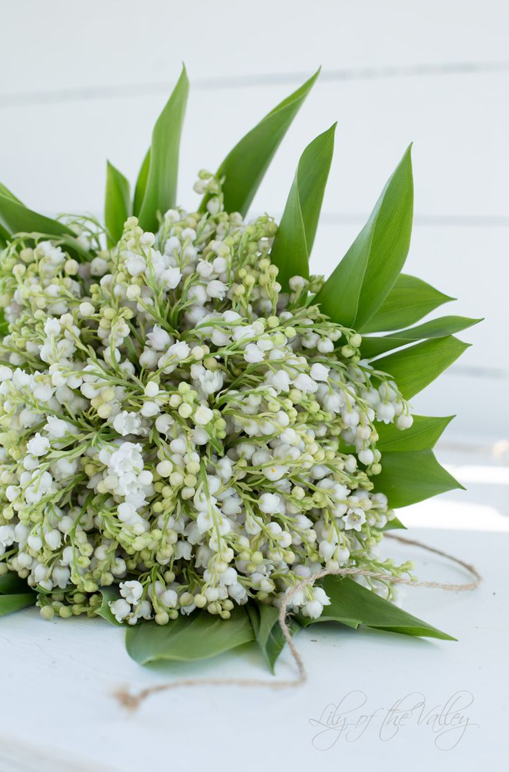 The 248 best lily of the valley images on pinterest beautiful lilies bouquets lily of the valley irises lily nosegay izmirmasajfo