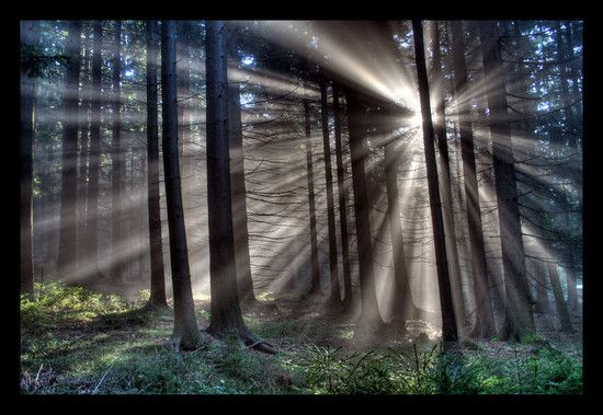 The sunlight through the trees, breathtaking!