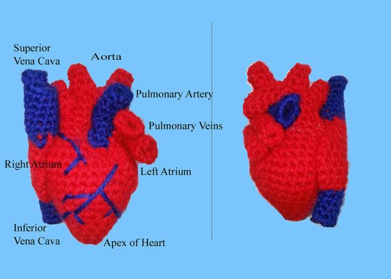 Human Heart Realistic Crochet Pattern 100% Scientifically Accurate Infant Size PDF