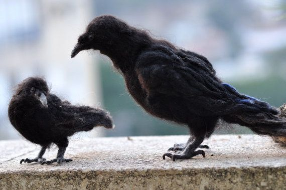 Needle Felted  bird. Black crow.
