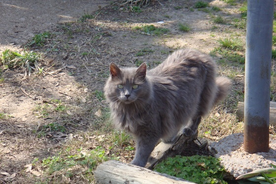 $200 Reward for My Grey Male Cat To Be Returned.Grey Male, Male Cat, Nice Post, 200 Rewards