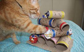Uma das melhores formas de estimular a inteligência do gato e manter ele entretido é dar-lhe um bom quebra-cabeça com petiscos (leia aqui um pouco mais sobre a importância disso). Essa opção é ridí...