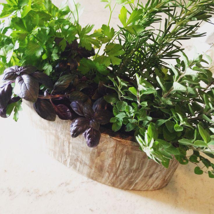 Herb planter in wood veneer oval planter.  #twigflowers #shoplocal #shopsmallbusiness #plants #herbs #ontariogrown #toronto #canada