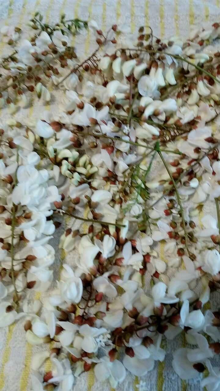 27.4.2017 fiori di Robinia pseudoacacia