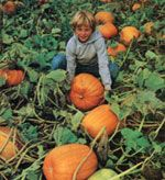 A Pumpkin Patch Business for Profit