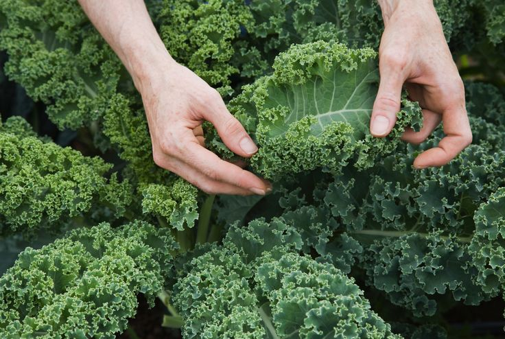 High Fiber Foods for Weight Loss-foods for thyroid