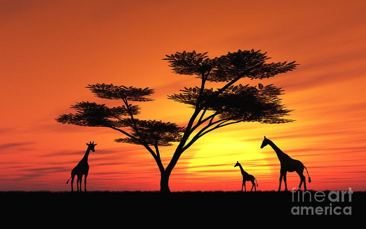 African Sunset with Animals | African Sunset Digital Art by Peter Kirschner - African Sunset Fine ...
